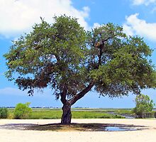 The Great Oak Tree_Color by TJ Baccari Photography
