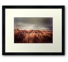 Marram Grass.. Framed Print