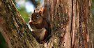 Cute Little Squirrel by Dave & Trena Puckett