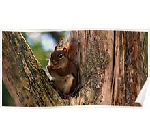 Cute Little Squirrel Poster