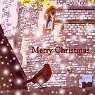 Merry Christmas: Robin in Snow at Windsor 2014 by CreativeEm