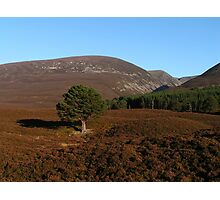 Autumn Afternoon in Glenfeshie - Cairngorms Photographic Print