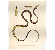 Leopold Joseph Fitzinger 1867 0129 Picture Atlas for popular scientific natural history of vertebrates Poster