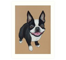 Boston Terrier Art Print