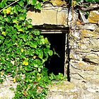 Ivy On Stone by Fara