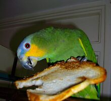 My parrot eating toast by skyhighart