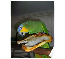 My parrot eating toast Poster