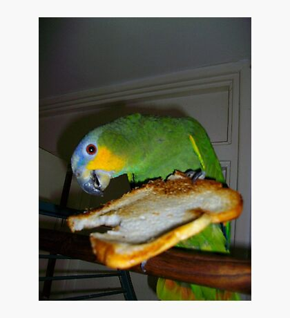 My parrot eating toast Photographic Print
