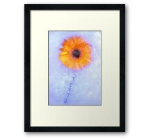 Yellow Gerbera In Ice Framed Print