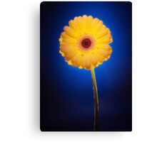 Yellow Gerbera On Blue Canvas Print