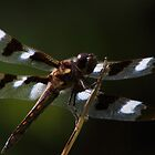 Twelve-spotted Skimmer by Kane Slater