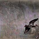 Pelican Peace by linaji