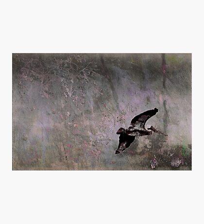 Pelican Peace Photographic Print