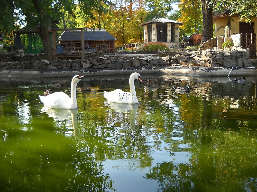 Swans Lake. by Vitta