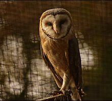 common barn owl by astroleaf