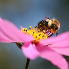 The Bee by Sjkphotography