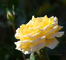 Yellow Rose With Distant Rose Bud by Terry Aldhizer