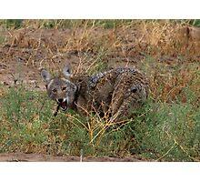 Coyote ~ Kaɪˈoʊti Photographic Print