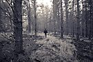 If you go into the woods... by SD Smart