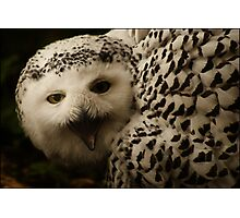 """Keep the distance"" Snow Owl Photographic Print"