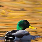 On Golden Pond by David Stegmeir