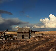 Wild Alberta Skies by Michael Collier