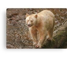 Spirit bear raspberry Canvas Print