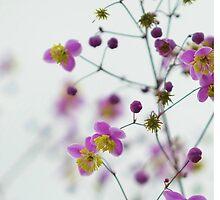 Decorative flowers by jasuparri