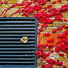 Colours of autumn by Tamara Travers