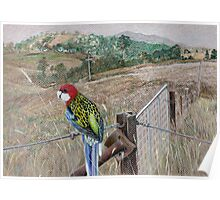 Parrot trapeze Poster