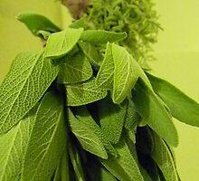 Drying Herbs by Leyla Hur
