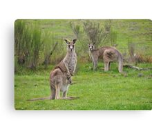 The Kangaroos of Hill End NSW Canvas Print