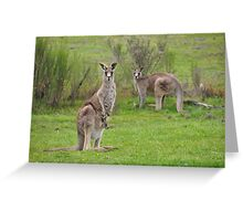 The Kangaroos of Hill End NSW Greeting Card