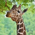 Tall and Derpy by Scott Mitchell