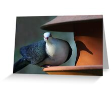A Shy Rainforest Pigeon Greeting Card