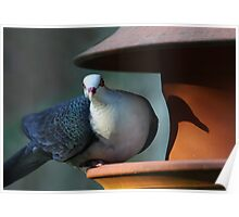 A Shy Rainforest Pigeon Poster