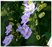 Blue Vine Flowers Poster