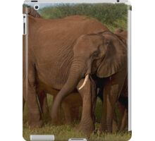 In Close For The Evening-Signed iPad Case/Skin