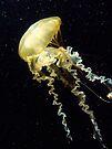 Interstellar Invertebrate by Georgie Hart