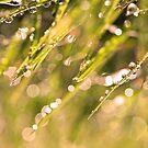Natures rain by AnnaWand