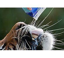 Here, Kitty, Kitty! Photographic Print