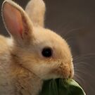 """Lunch Time"" - baby Rabbit by Sophie Lapsley"
