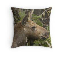 Baby Moose Throw Pillow
