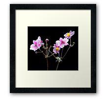 Anemone flowers Framed Print