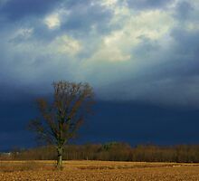 looming Thanksgiving Day storm clouds  by Roxygirl
