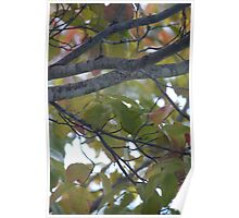 Dogwood Tree in October Poster