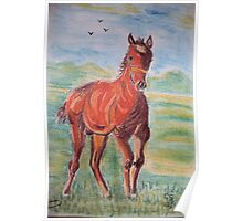 Thoroughbred Colt Poster