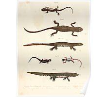 Leopold Joseph Fitzinger 1867 0209 Picture Atlas for popular scientific natural history of vertebrates Poster