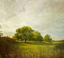 Montpellier Water Meadows by paulgrand