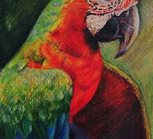 Tropical Bird, Macaw by Magaly Burton